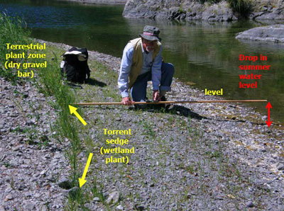 geologist Mike Lane measures the elevation difference between the late summer channel pool surface level, and the sharp upper edge of the wetland plant zone