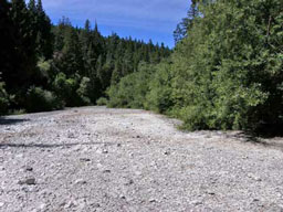 8/19/08 Wheatfield Fork downstream of Haupt Creek