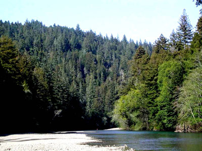 Gualala River & redwood forest