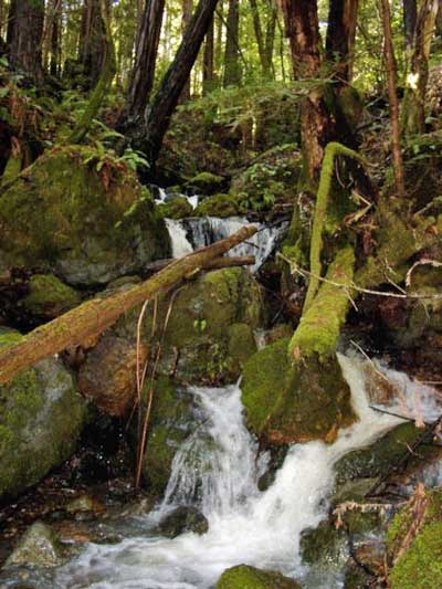 waterfall, Gualala River watershed